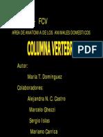 Columna Vertebral Vet