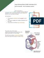 07 Human Transport Biology Notes IGCSE 2014.pdf