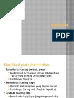 Klasifikasi Plathyhelminthes
