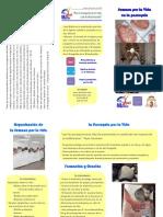Tríptico para información de parroquias por la vida