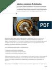 Pruebas mantenimiento motores eléctricos