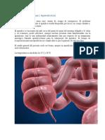 Urgencias Medicas ( Apendicitis)