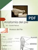 Anatomia Del Pie