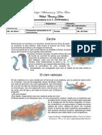Evaluacion Planea Español 3