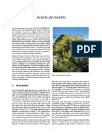 Wikipedia's Featured Article - 2015-09-01 - Acacia Pycnantha