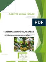 Cáceres Loeza Teriuse-ecosistemas Urbanos