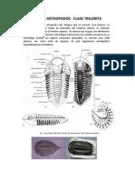 Graptolites y Trilobites