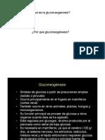 PDF-Clase de L Palomares Gluconeogenesis
