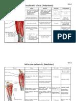 Anatomia dos musculos do corpo humano