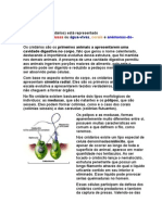 Filo Cnidaria.docx