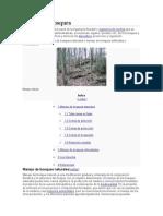 Manejo de Bosques Berr
