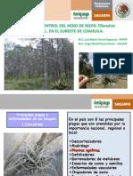 06 Acciones de control de heno motita.pdf
