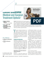 Canine Glaucoma- Medical and Surgical Traetment Options