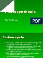 Photosynthesis GLOBAL