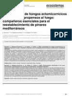 Comunidades de Hogos Ectomicorricicos