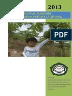 Proposal Agribisnis Bina Amanatika Cilegon Budidaya Pepaya California2