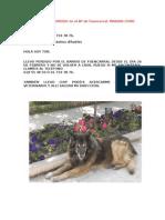 Tor, Perro Perdido en Madrid