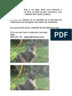 Ona, Gata perdida en Zaragoza, en zona facultad de veterinaria, ctra. de castellón