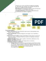 Resumo Microbiologia Ambiental