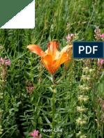Blumen Album Elfte Reise 2002