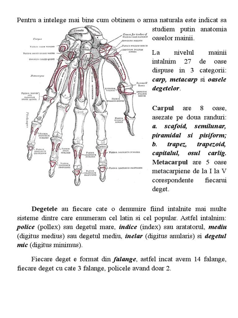 articulație pe degetul mare