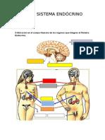 Tarea Sistema Endócrino