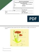 5ª Raiz,caule, folha e flor