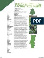 Amieiro - Alnus Glutinosa - Florestar_1