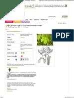 Acer Pseudoplatanus Sycamore, Great Maple, Scottish Maple, Planetree Maple PFAF Plant Database MED 1