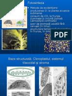 1Fiziologia plantelor (olimp.)