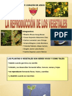 la reproduccion de los vegetales - diapo.ppt