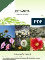 BOTANICA - Familia Asteraceae.pptx