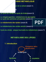 métabolisme des lipides