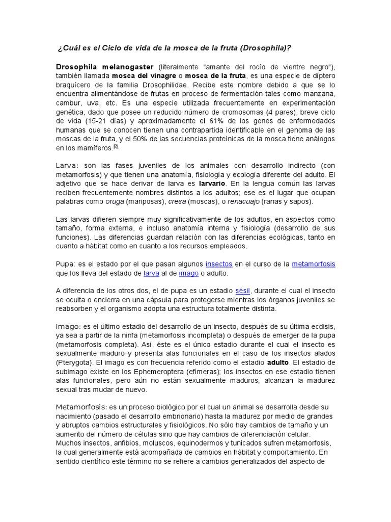 Bonito Anatomía De La Fruta Foto - Imágenes de Anatomía Humana ...