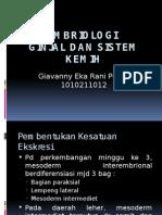 Embriologi GUS (2)