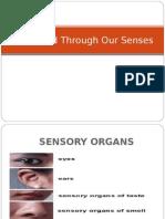 World Through Our Senses (All Sensory Organs).ppt