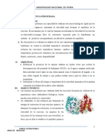 actividad enzimatica peroxidasa