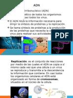 adn biologia.pptx