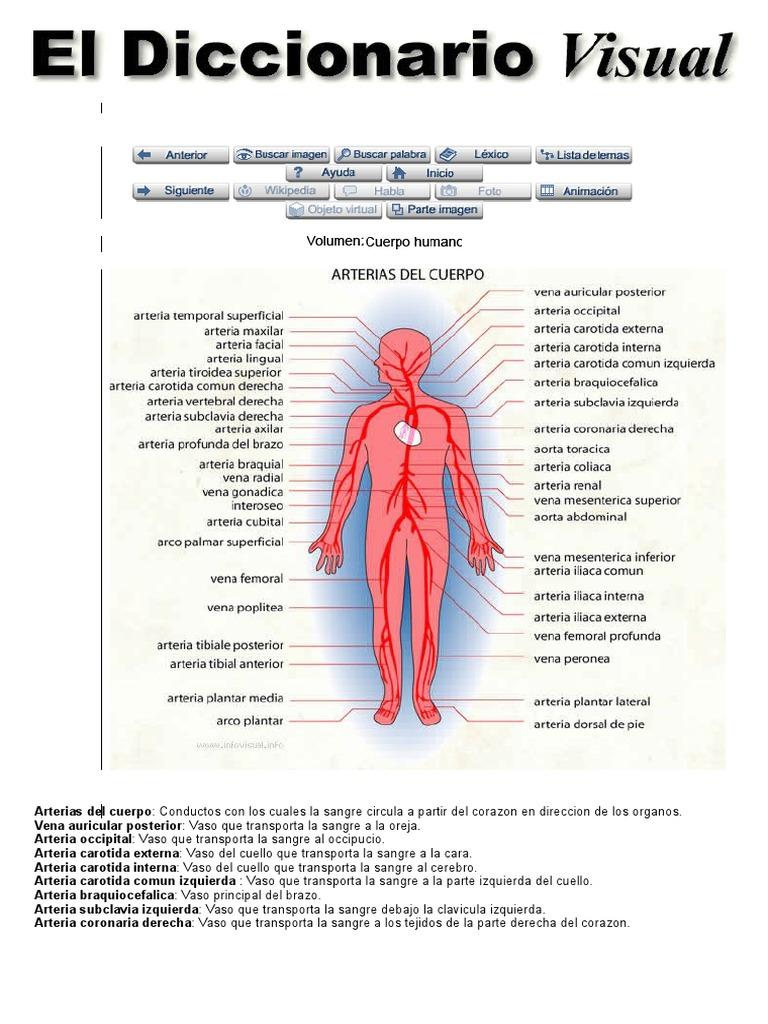 Dorable Mayordomo Y Lewis Agujeros Shier Anatomía Y Fisiología ...