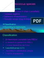 Streptococcus Species