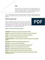 Animal Cell Definition