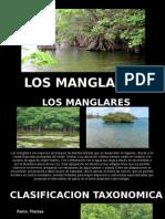 LOS MANGLARES.pptx