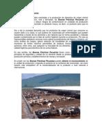 BuenasPrácticasPecuarias.pdf