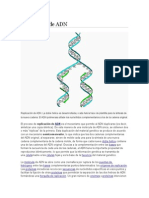 Genetica replicacion