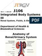 2. Anatomy of Renal-Urinary PPP.pptx