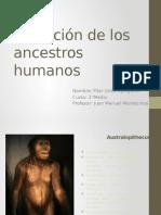 Evolución de Los Ancestros Humanos