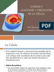 Unidad II Anatomia Y Fisiología de La Celula