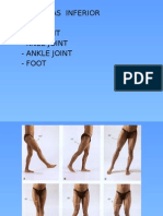 Anatomi Inferior
