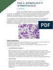 PRÁCTICA 1- Bacteriología general