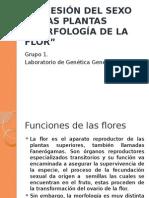 Morfología de La Flor